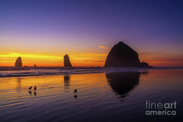 Wall Art - Photograph - Oregon Coast Three Little Birds by Mike Reid