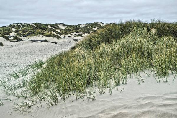 Oregon Sand Dunes Photograph - Oregon Dunes 2 by Bonnie Bruno