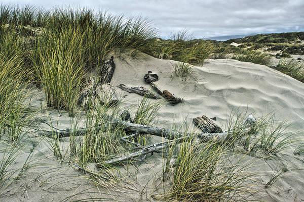 Oregon Sand Dunes Photograph - Oregon Dunes by Bonnie Bruno