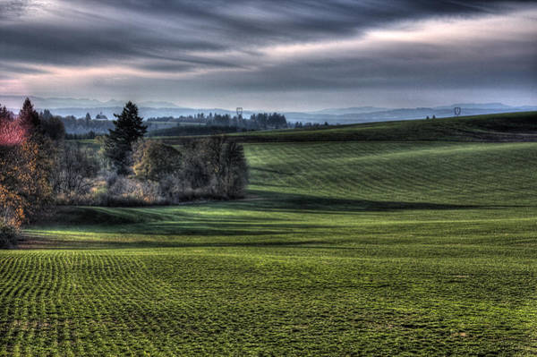Photograph - Oregon Field by Lee Santa