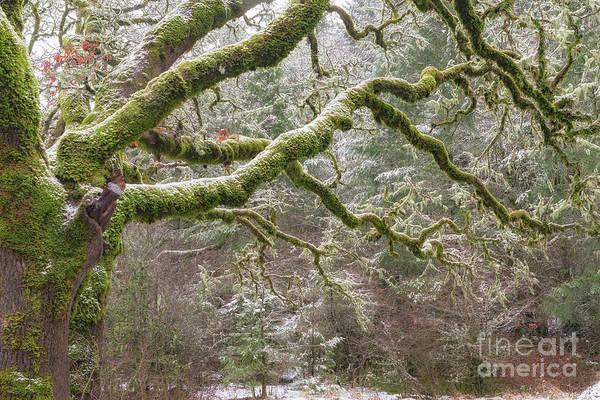 Photograph - Oregon Tree Moss by Richard Sandford