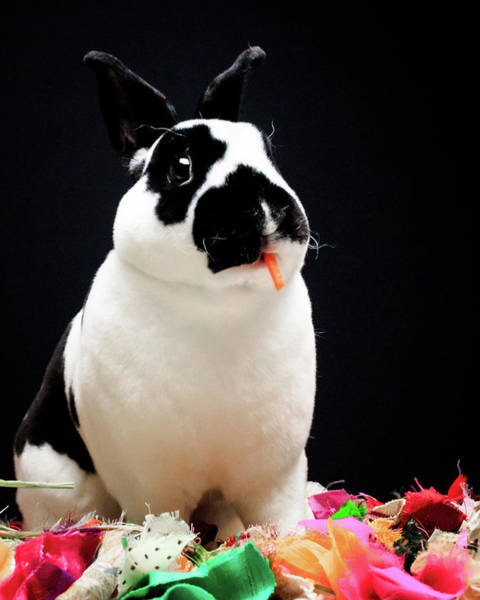 Photograph - Oreo by Jeanette Fellows