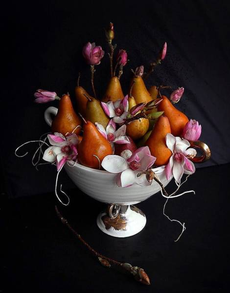 Photograph - Organic Bosc Pears And Magnolia Blossoms by Sarah Phillips