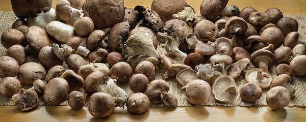 Fungi Photograph - Organic Fresh Mushrooms by Steve Gadomski