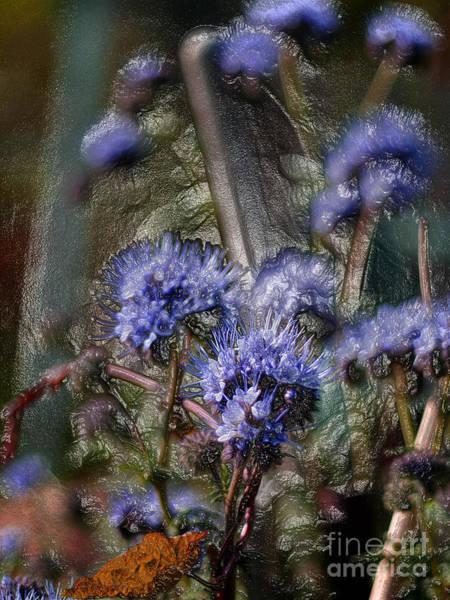 Photograph - Organic Series 5 by Lance Sheridan-Peel