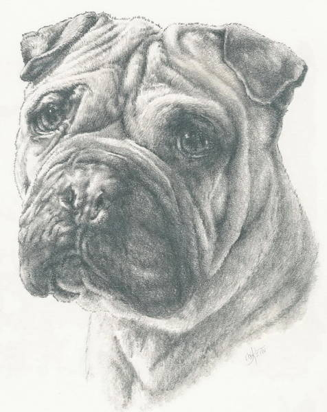 Mutt Drawing - Ori-pei by Barbara Keith