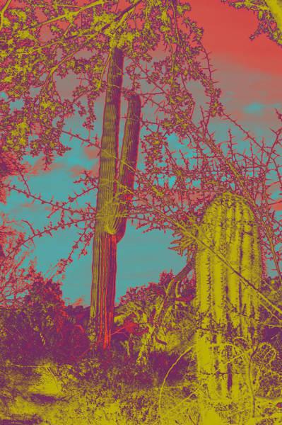 Liechtenstein Digital Art - Oriental Colors Of Arizona by Carolina Liechtenstein