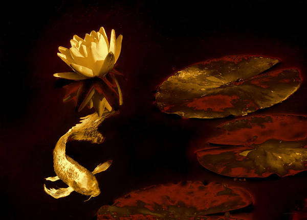 Koi Photograph - Oriental Golden Koi Fish And Water Lily Flower by Jennie Marie Schell