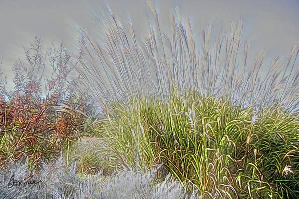 Photograph - Oriental Grasses by Bonnie Willis