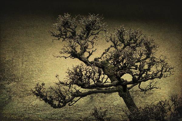 Wall Art - Photograph - Oriental Tree by Michel Emery