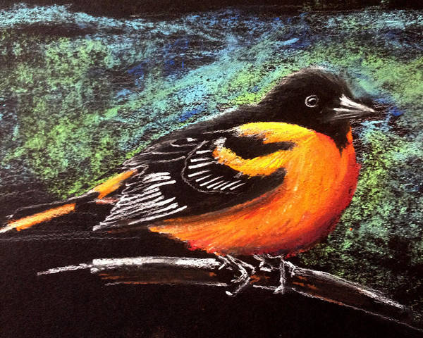 Oriole Drawing - Oriole by Holly Whiting