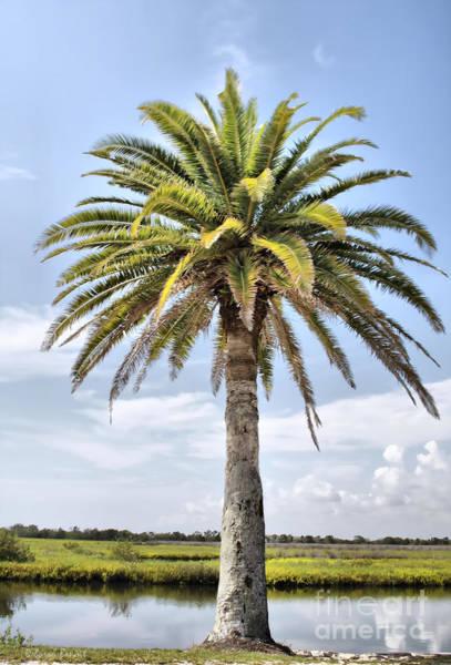 Ormond Photograph - Ormond Loop Palm by Deborah Benoit