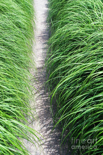 Ornamental Grass Photograph - Ornamental Grass And Path by Tim Gainey