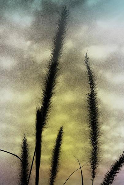 Wall Art - Photograph - Ornamental Grass by Kenneth Krolikowski