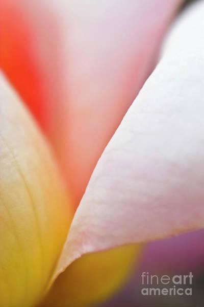 Photograph - Ornamental Rose Flower Details by Heiko Koehrer-Wagner
