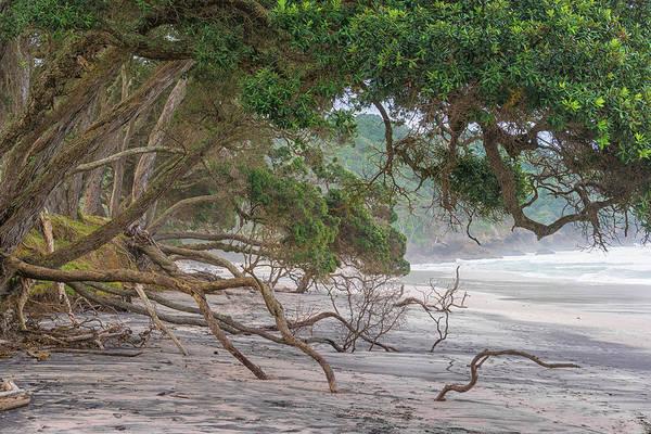Pohutukawa Photograph - Orokawa Bay by Martin Capek
