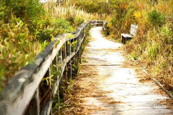 Photograph - Orr Bog Walk by Lori Dobbs
