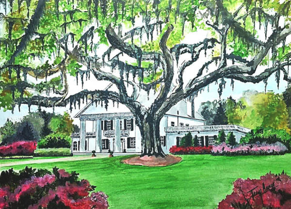 Haunted House Drawing - Orton Plantation by Terry Ganey