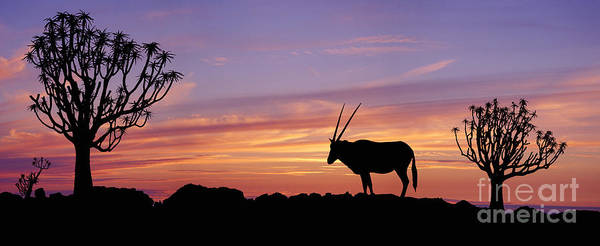 Photograph - Oryx And Quiver Trees At Sunset by Warren Photographic