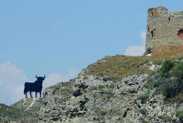 El Toro Photograph - Osborne Bull 2 by Randall Weidner