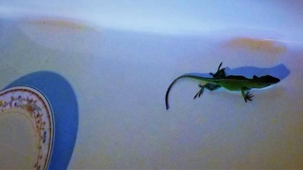 Photograph - Oscar The Lizard by Denise F Fulmer