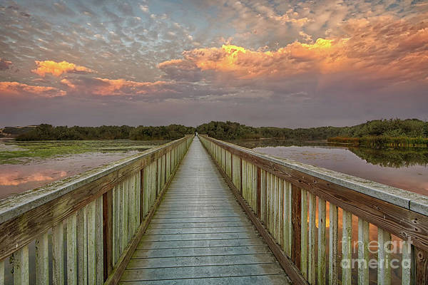 Photograph - Oso Flaco Sunrise by Beth Sargent