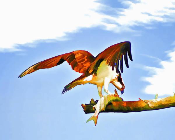 Photograph - Osprey And Sushi by Ginger Wakem