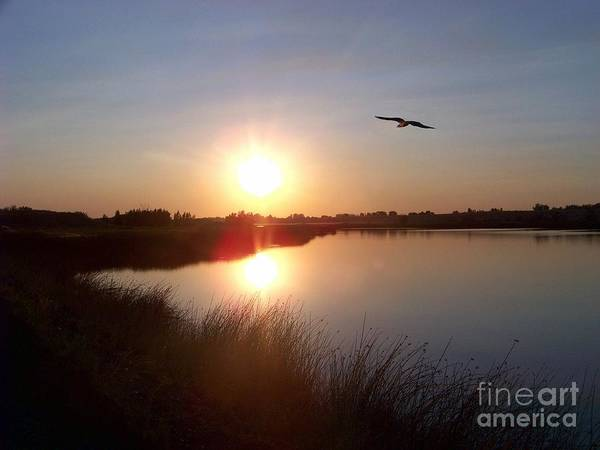Photograph - Osprey At Sunset by Charles Robinson