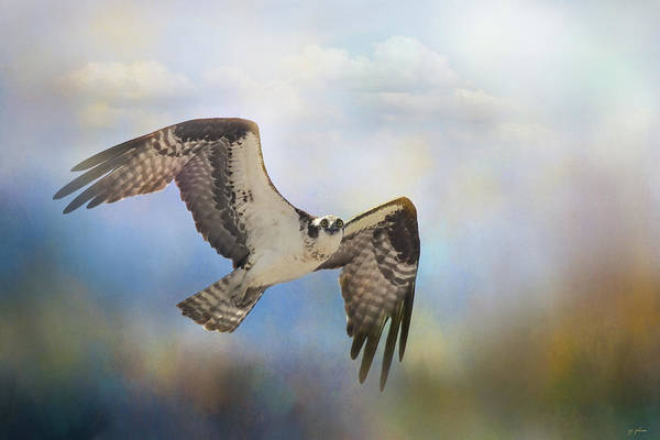Photograph - Osprey Coming In by Jai Johnson