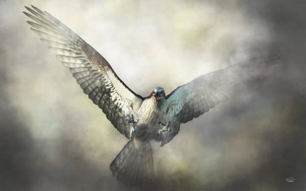 Digital Art - Osprey by Daniel Eskridge