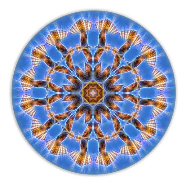 Digital Art - Osprey Energy Mandala by Beth Sawickie