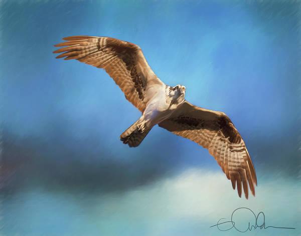 Digital Art - Osprey On The Hunt by Gloria Anderson