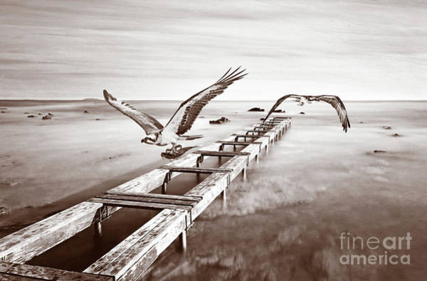 Fish Eagle Photograph - Osprey On The Move Bw by Laura D Young
