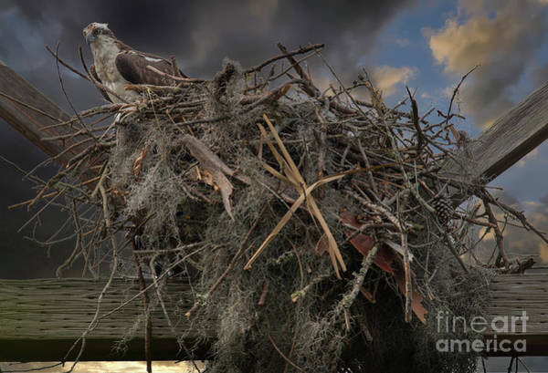 Photograph - Osprey Protecting The Nest by Dale Powell