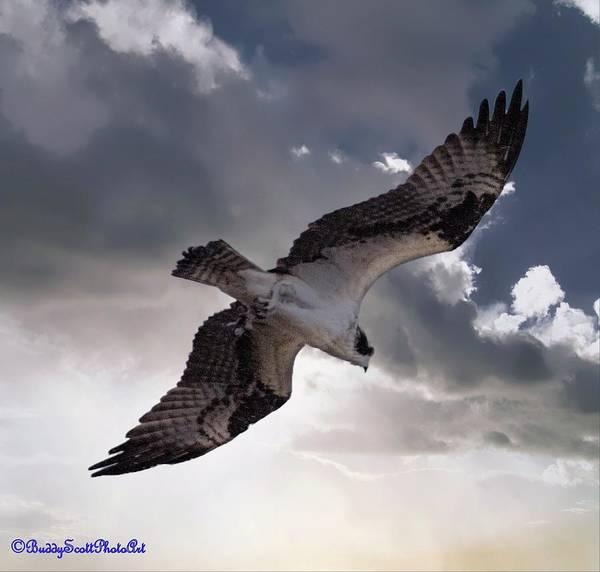 Photograph - Osprey Sky by Buddy Scott