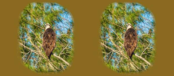 Photograph - Osprey Vigilance Mugshot by John M Bailey