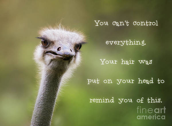 Quotation Photograph - Ostrich Having A Bad Hair Day by Jane Rix