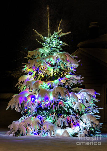 Photograph - O'tannenbaum by Rod Best