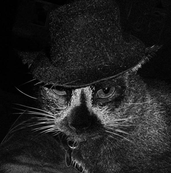 Cat In The Hat Wall Art - Photograph - Otis by Mike Moss