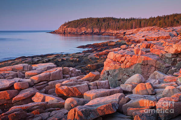 Wall Art - Photograph - Otter Cliffs  by Susan Cole Kelly