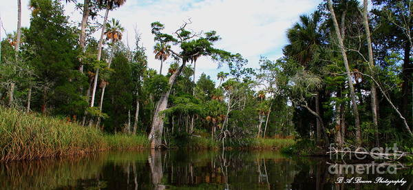 Photograph - Otter Creek by Barbara Bowen