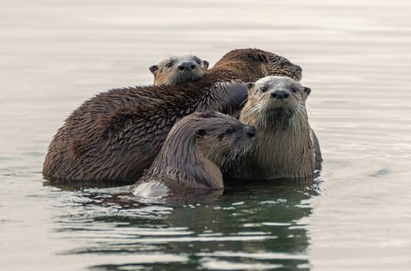 Photograph - Otter Encounter by Loree Johnson