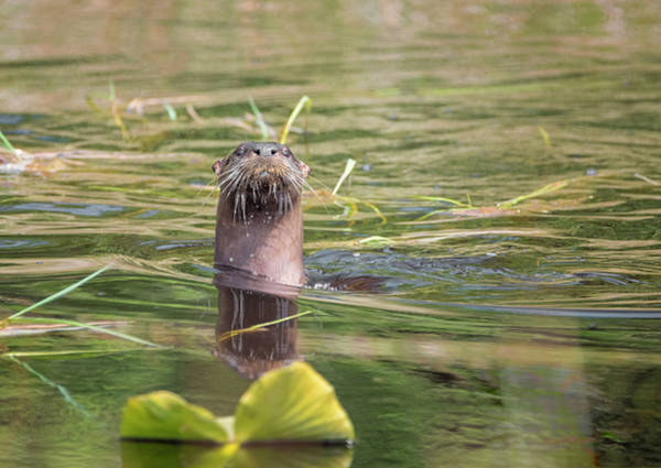 Photograph - Otter Lookout by Loree Johnson