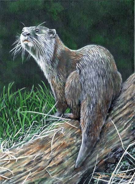 Painting - Otter On Branch by John Neeve