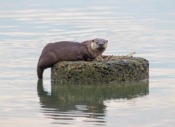 Photograph - Otter Ruins by Loree Johnson