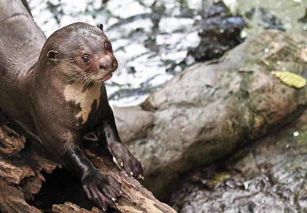 Otter Surprise Art Print