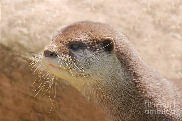Aonyx Cinerea Photograph - Otterly Close by MSVRVisual Rawshutterbug