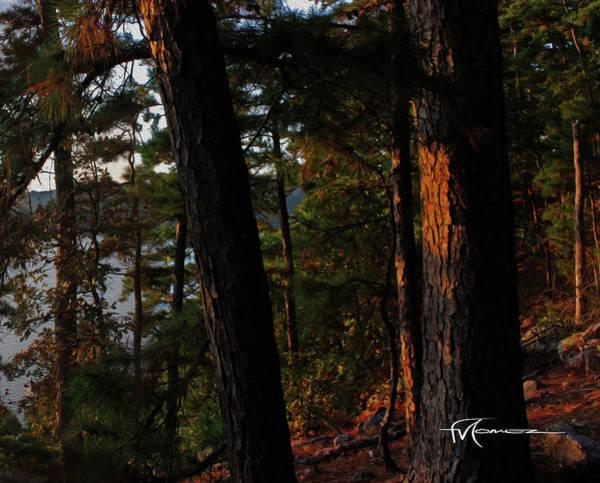 Wall Art - Photograph - Ouachita Autumn Sun D by Felipe Gomez