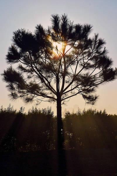 Photograph - Our Borrowed Earth by Melanie Moraga