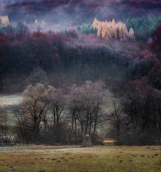 Wall Art - Photograph - Our Forests In The Winter by Adrian Malanca